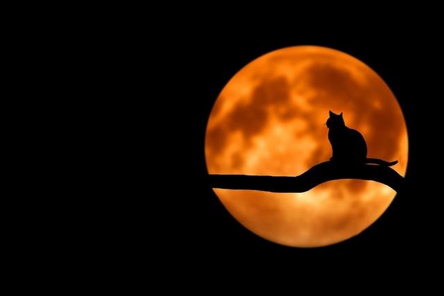 満月tree-736877_1280.jpg